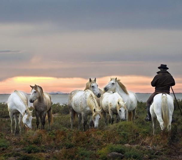 Balade à cheval aux Vigueirat