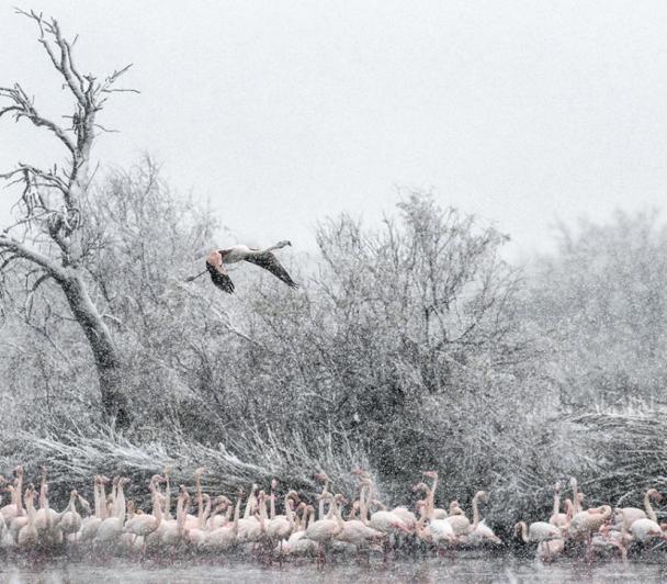 Nature Glacée de Thierry Vezon