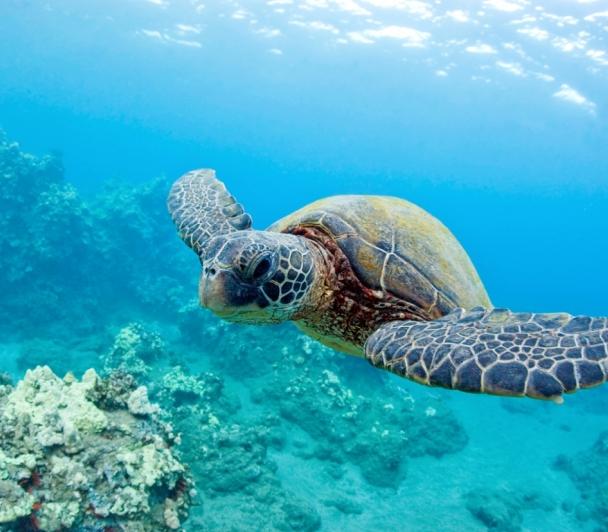 A la rencontre des tortues en Méditerranée
