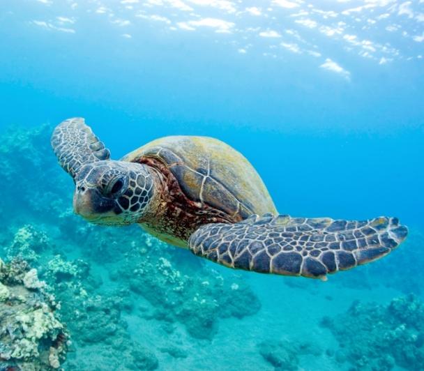 A la rencontre des tortues de Méditerranée