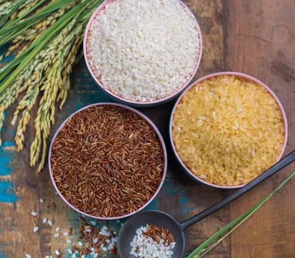 Valorisation du riz de camargue IGP