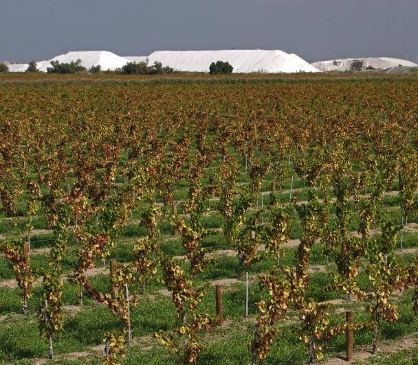 De la vigne au vin sur le Domaine Royal de Jarras