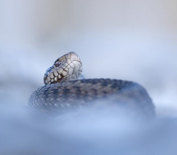 Serpents, du mythe à la réalité de Maxime BRIOLA