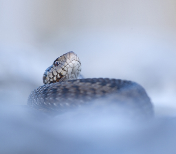 Master-Classe nature : Les serpents