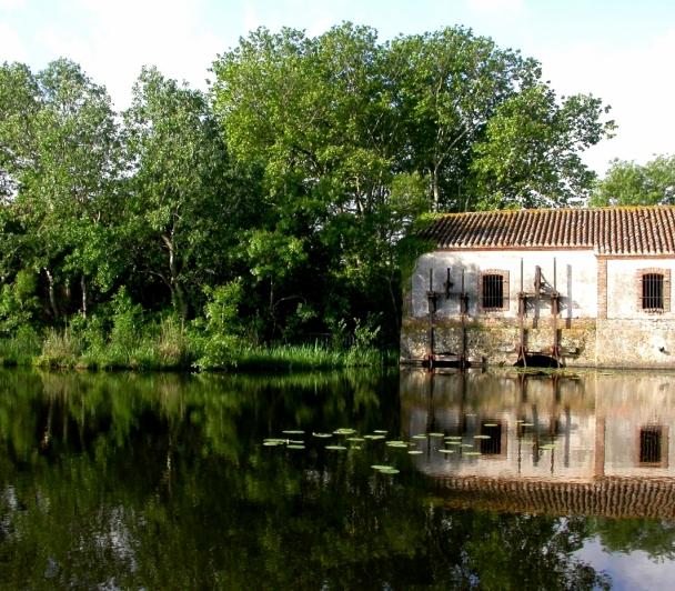 Le marais de Bondoux
